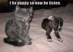 So cute...I'd love to have a puppy and kitten at the same time...