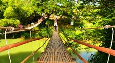 """Hanging Bridge At Sevilla Take a motorcycle ride to the Bamboo Hanging Bridge crossing the Sipatan River in the Municipality of Sevilla, Bohol, near Loboc. Its a fun and interesting tourist attraction. CNN counted Tigbao Hanging Bridge in Sevilla Bohol among the world's 13 """"most spectacular foot bridges"""" in a list released in 2016. Its a must see destination when touring Bohol on one of our rented motorcycles."""