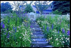 Blue and white in the garden, delicious - downeast magazine