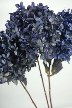 dried hydrangeas by loracia Peonies And Hydrangeas, Hydrangea Flower, Silk Flowers, Dark Blue Flowers, Dried Flowers, Reception Table Decorations, Wedding Reception Tables, Very Beautiful Flowers, Shades Of Violet