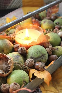 Acorns, Black Walnuts and Candle, by Common Ground - Debra's Vintage Designs