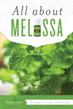 Melissa oil is a rare oil that can be found in Young Living blends such as Humility, Forgiveness, and Hope. Find out how it can enrich your life here.