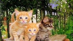 Posted November 2017 The Harnett County Animal Shelter in North Carolina is improving policy and procedures after 59 cats were euthanized in June due to panleukopenia (AKA panleuk) exposure. PoC covered the tragic story here and here. Three Blind Mice, Sick Cat, Animal Shelters, Kittens, Cats, Cool Things To Make, Animal Rescue, North Carolina, November