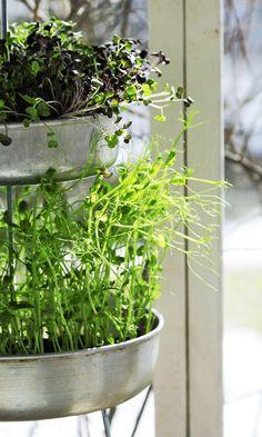 Tee versojen kasvutorni alumiinivuoista | Meillä kotona Easy Projects, Hygge, Home And Garden, Yard, Diy Crafts, Canning, Plants, Dyi, Diy Ideas