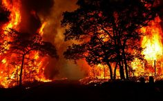 the scp burnt down a part of the forest that night...they contained it, but they had burned a part of my home..a part of me. disgusting. -valerie