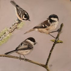 Coaltits by Julie Wilson Bird Paintings, Watercolor Paintings, Julie Wilson, Bird Drawings, Painting & Drawing, Paint Colors, Colour, Landscape, Artist