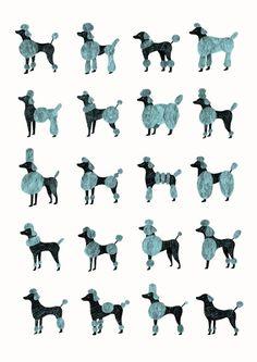 Huxtable The Poodle | Toy Poodle Blog | Parti Poodle: Modern Poodle Grooming Chart Illustration