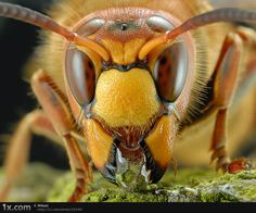 Macro photo of an insect