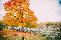 See 65 photos and 5 tips from 370 visitors to Cimetière du Mont Royal. Royal Park, Autumn Colours, Lilacs, Cemetery, Montreal, Heavenly, Wander, Paths, Challenges