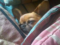 Rocky the dog. Good Ol, Dogs, Animals, Animais, Animales, Animaux, Pet Dogs, Doggies, Animal