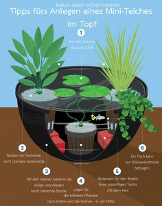 Balkon Ideen selber Machen: Ein Mini-Teich im Topf Make your own balcony ideas: A mini-pond in the p Outdoor Plants, Outdoor Gardens, Mini Pond, Indoor Water Fountains, Real Plants, Fun Hobbies, Tropical Garden, Water Garden, Herbs Garden