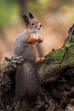 the classic squirrel with nut pose (well no nut, but the pose is there) one day