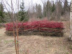 Pieni risuaita syntyi pensaiden leikkauksen jälkeen