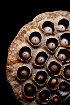 Lotus seed pod: lotus seeds are used in Chinese herbiology to calm the spirit, cool the body, and beautify skin.