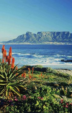 Table Mountain in South Africa. Scenic Photography, Landscape Photography, Foto Picture, Le Cap, Cape Town South Africa, Table Mountain, Best Sunset, To Infinity And Beyond, Africa Travel