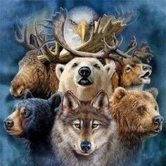 """""""Each creature has a medicine, so there are many medicines. Because they are so close to the creator, they are to communicate that medicine. Then they bring help and health."""" -- Wallace Black Elk, LAKOTA"""