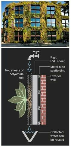 Pictures: Green Walls May Cut Pollution in Cities