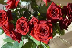 Beautiful Happy Roses Day Wallpapers Images Free Download In Hd