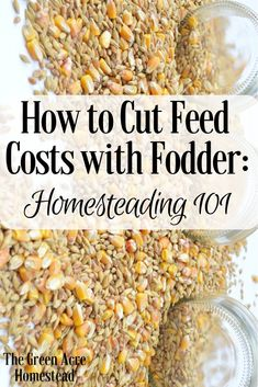 *How to Cut Feed Costs with Fodder: Homesteading Are you looking to spend less money at the farm and feed store? Let me tell you how to cut feed costs by growing fodder! Meat Chickens, Raising Chickens, Chickens Backyard, What To Feed Chickens, Urban Chickens, Fodder System, Cattle Farming, Livestock, Cow Feed