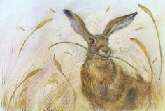 Nature Through the Eyes of Kate Wyatt! Rabbit Drawing, Watership Down, Arts And Crafts Supplies, Source Of Inspiration, Framed Art, Wildlife, Eyes, Drawings, Creative