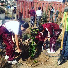 Esta semana plantamos 16 #arboles de sombra y frutales en la secundaria  general #99 Rubén Vizcaíno de la colonia Roma de la Amistad #ciudadanosconscientes
