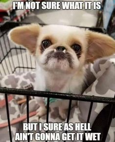 funny dogs memes Funny Animal Picdump of The Day 391 Photos) - Animals have their own funny side, and here in funny animal picdump of the day - 391 you will find 28 funny animal pictures. Funny Animal Photos, Funny Animal Memes, Dog Memes, Cute Funny Animals, Cute Baby Animals, Funny Cute, Funny Dogs, Animals And Pets, Funny Memes