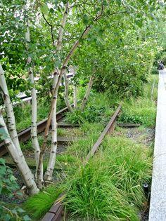 high-line-trees-among-tracks.jpg