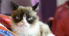Sabías que Acéptalo, tu gato no te quiere