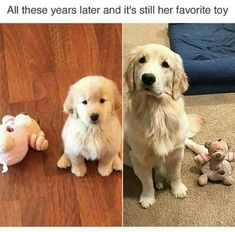 Cute animals - 40 Animal Pictures to Make You Laugh on Bad Days Funny Dog Memes, Funny Animal Memes, Funny Dogs, Pet Memes, Funny Cartoons, Memes Humor, Cute Little Animals, Cute Funny Animals, Funny Cute