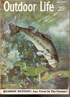 Outdoor Life Magazine August 1952 Quabbin Mystery Any Trout in The Streets Magazine Art, Magazine Covers, Outdoor Life Magazine, Fishing Magazines, Life Cover, Fish Camp, Vintage Fishing, Outdoor Art, Wildlife Art