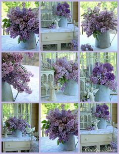 I loved the Lilacs in Michigan.  Wish they would grow in Florida - I miss the aroma...............