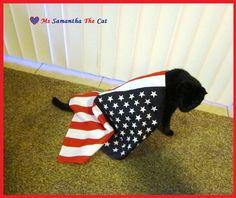 Patriotic Kitty!