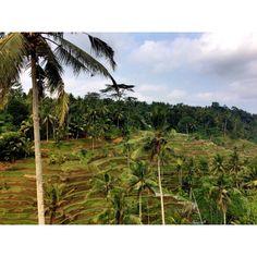 Bali,Ubud,Tegallalang