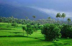 Southwest monsoon in Kerala, Monsoon Rain Picture , it's raining kerala monsoon raining pictures