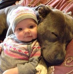 . See people out there pitbulls can be nice it is just the way they are treated is the way they act!