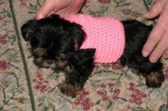 Free Crochet for Pets   CROCHET DOG FREE PATTERN SWEATER TURTLENECK   Crochet Patterns