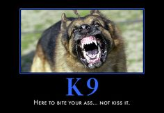 Police Dogs In Action The Canine Unit Will Allow The. Police Dog I Trial In Minnesota Lima And Judge Along With 4 Other Boston Police Puppy Cop Tuco Captures The Hearts Of Pretty Much Cops Humor, Police Humor, Police Dogs, Police Wife, Drunk Humor, Ecards Humor, Nurse Humor, Military Working Dogs, Military Dogs