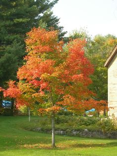 Wilmot, NH, tree changing colors