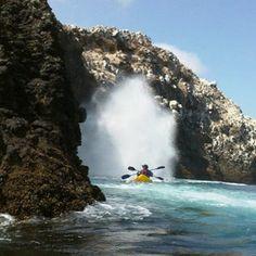 Weekend Getaways Los Angles - Kayaking the Channel Islands California Destinations, Us Destinations, Visit Santa Barbara, Santa Cruz Island, Channel Islands National Park, Adventure Company, Sup Yoga, Kayak Tours, Camping Lights