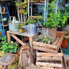 . 木製のテーブル、椅子、木箱、踏台、鉄製の脚立など。新しい年にむけ、植物コーナーの模様替えにいかがでしょうか。 . #梯子 #木箱 #踏台 #脚立 #椅子 #ブリキ #ミルク缶 #アンティーク #古道具 #植物と一緒に楽しむ #Kitowa #樹と環 #名古屋 #千種
