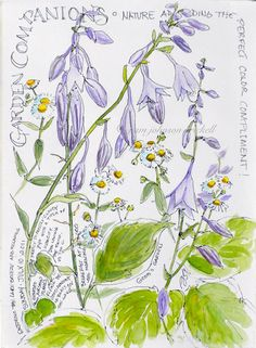 Sketching in Nature: Garden Companions - Pam Johnson Brickell