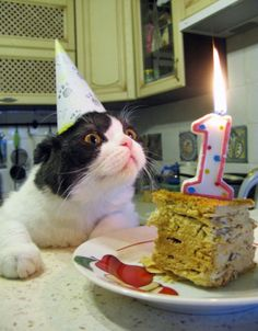funny happy birthday kitty photo make a great cat lovers card , find more cat related art , fashion and fun by following KAREN HAULER-DAVIES as well as this great board