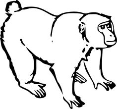 monkey black white line art coloring book clipart best