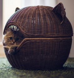 Kitty Death Star #CatHouse