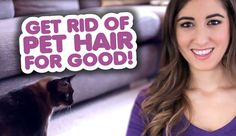 Get Rid of Pet Hair for Good! I'm about to share a house with 3 cats. These tips are fantastic!