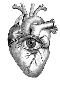 And color the eye pale blue like tell tale heart by edgar allen poe anatomical heart Anatomical Heart Drawing, Human Heart Drawing, Brain Drawing, Art And Illustration, Brain Tattoo, Kunst Tattoos, Skull Tattoos, Foot Tattoos, Flower Tattoos