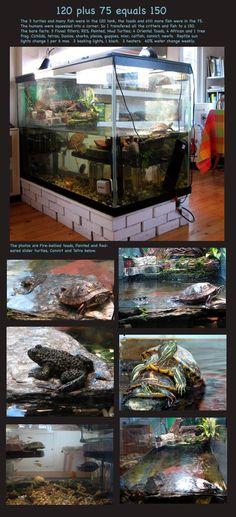 Put tank up on bricks Turtle Habitat, Reptile Habitat, Reptile House, Reptile Room, Aquatic Turtle Tank, Turtle Aquarium, Aquatic Turtles, Aquarium Fish, Turtle Terrarium
