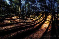 Long shadows in Raven Wood by John Stewart