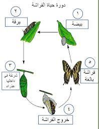 دورة حياة الضفدع بحث Google Learning Arabic Arabic Kids Arabic Language