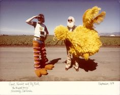 Lessons in Crowd Sourcing, from the I Am Big Bird Project.